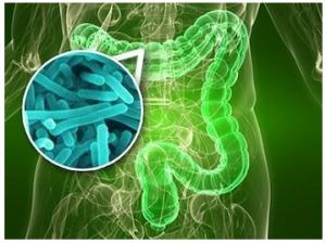 naravni probiotiki