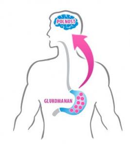 kako-deluje-glukomanan