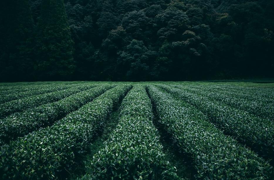 zeleni-caj