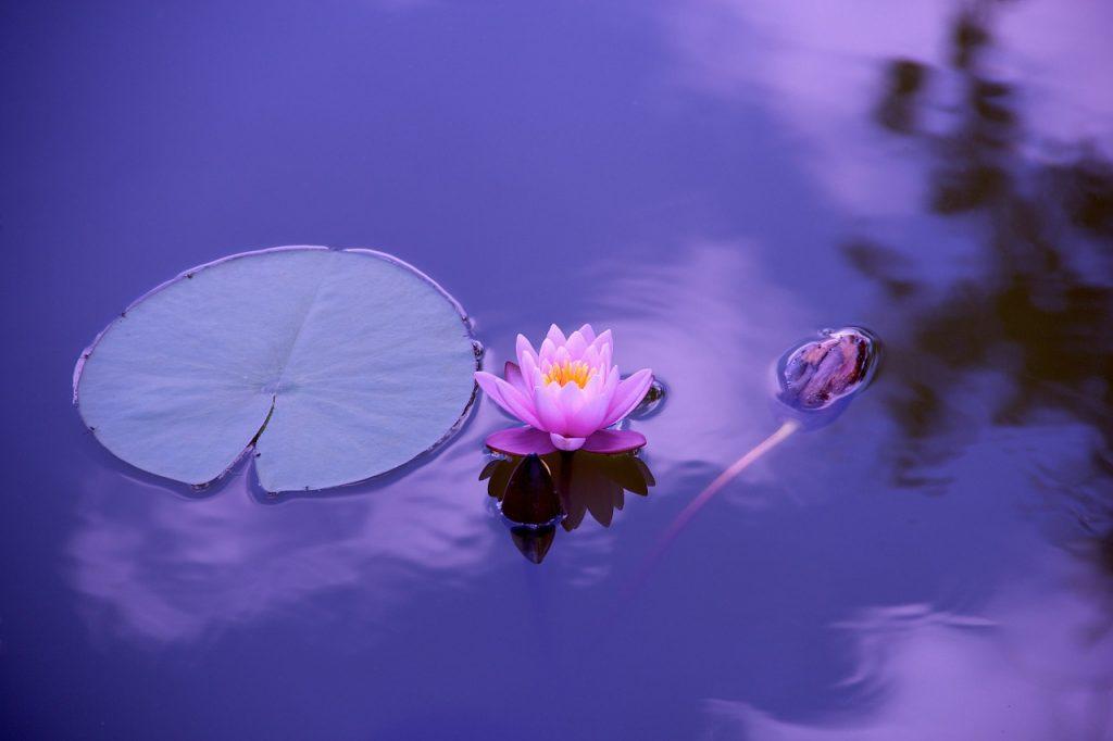Mir in harmonija v življenju