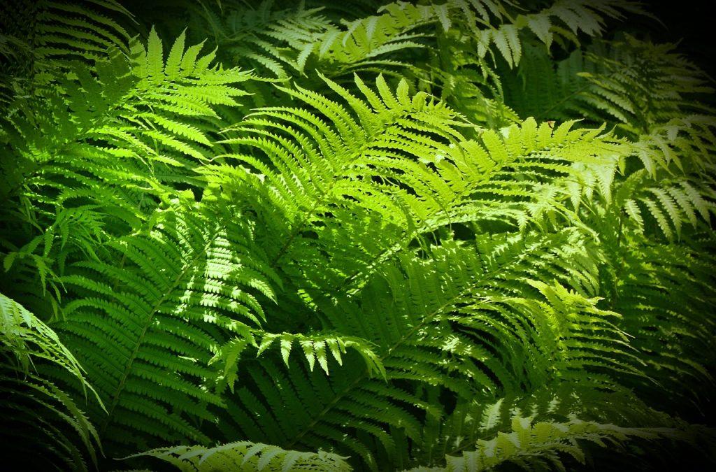 feng shui rastline